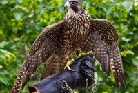 Экскурсия в питомник хищных птиц Холзан